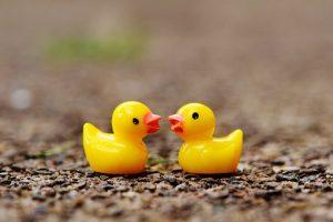 body_ducks